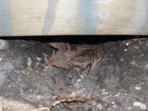 Signs of animal activity under the foundation